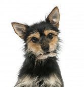 Close-up of a mixed-breed dog  looking at the camera, isolated on white