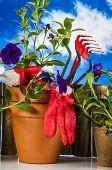 Garden stuff on bright blue background