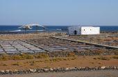 Esqueleto de ballena y salino en Fuerteventura España