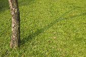 Tree On Lawn