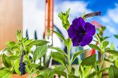Spring climate with gardening stuff