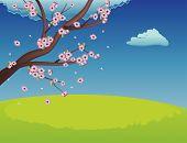 Sakura On Grass Field