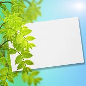 Postcard With Fresh Green Foliage And Place For Your Text