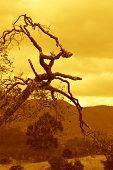 Aged Tree At Sunrise