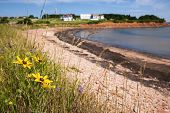 Wildflowers on Prince Edward Island coast near village of North Rustico in Green Gables Shore,  PEI, Canada.