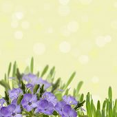 Abstract Background With Spring Flowers