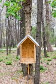 Bird House In The Wood