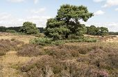 Landscape In National Park Hoge Veluwe.