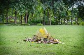 A Pile Of Leaves On The Lawn