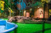 foto of terrarium  - Crocodile in captivity - JPG