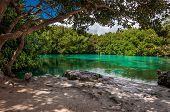 stock photo of groundwater  - Casa Cenote limestone mangrove with amazing green water - JPG