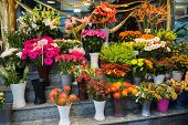 stock photo of flower shop  - Street flower shop with colourful flowers - JPG