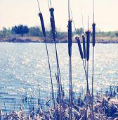 Lake And Reed