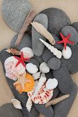 Sea shell, driftwood and pebbles on a sand beach background.