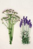Valerian and lavender herb flowers over mottled cream background. Used in alternative medicine as calming medicine.