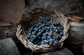 picture of stomp  - isolated clusters of grapes on wicker basket - JPG
