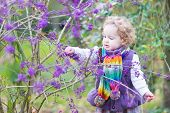 Cute Toddler Girl Picking Purple Berries In An Autumn Park