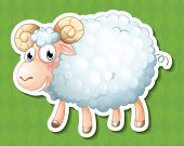 Illustration of a close up sheep