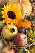.autumn Abundance