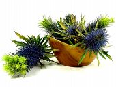 blue thistle in a bowl