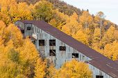 Abandoned Mine amid Autumn Trees