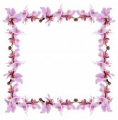 Frame of beautiful blossom isolated on white