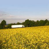 White truck behind a bright rape field