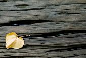 Crack Hard Wood With Dried Leaf Background