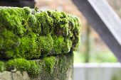Green moss with old well