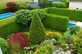 garden with swimming pool and ornamental trees