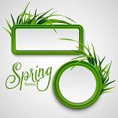 foto of lawn grass  - Spring frame with grass - JPG