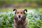 Dog posing on a background of blue flowers