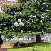 Green Tree In A Park In Evian-les-bains In France