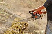 image of tree trim  - Logger triming and delimbing oak trees at a new commerical construction development - JPG