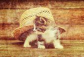 Curiosity Kitten Under Hat