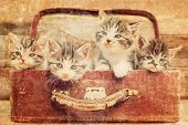 Cute kittens sitting in a suitcase