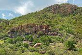 image of vegetation  - Lush green vegetation on the rocky hills at the outskirts of Gaborone Botswana  - JPG