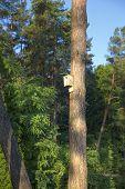 Birdhouse On A Pine Tree