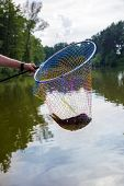 Landing Net With Caught Fish