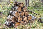 Small birch logs.
