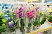stock photo of flower shop  - A beautiful colorful flowers in flower shop - JPG