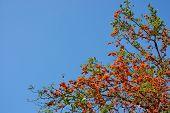 Orange Flower On The Tree