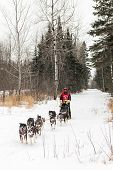 Beargrease 2015 Mid Distance Bill Olson On Trail