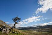 Kingsdale Tree