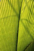 Green leaf palm