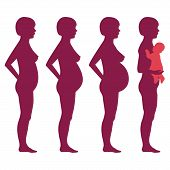 vector pregnancy stages,