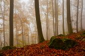 Carpathian beech forest, Slovakia.