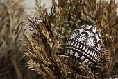 Easter Egg In Jericho Rose