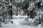 Snowshoe Trail