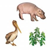baby hippopotamus, pelican standing proud on a white background. nettle plant illustration of Brown